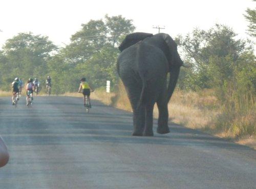 Dieser Elephant war hinter Alice her - so schnell war Alice noch nie auf dem Rad gesehen