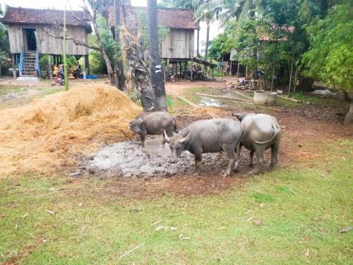 Nutztiere vor einem einfachen auf Stelzen gebauten Holzhaus