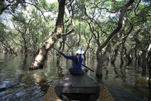 fühlte sich an wie ein Mangrovenwald